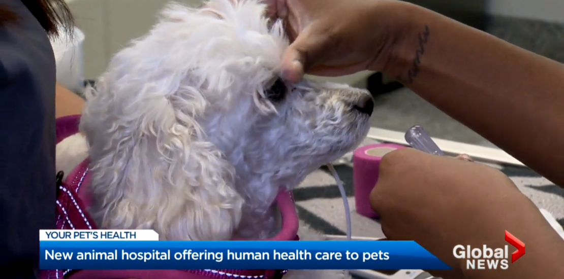 Animal Health Partners Featured on Global News - Making a Difference with Susan Hay 5